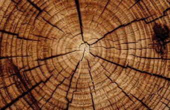 Trunk Tree Texture Wallpaper 720x1544 340x220