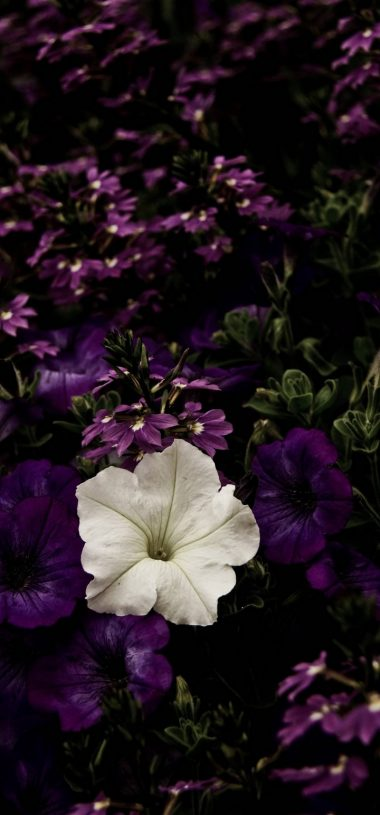 White Flowerbed Contrast Wallpaper 720x1544 380x815