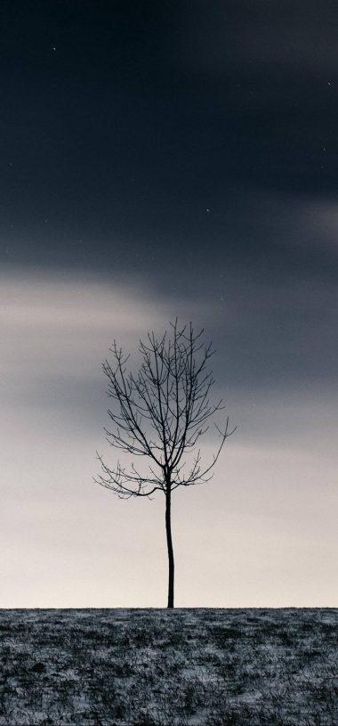 Winter Tree Sky Wallpaper 720x1544 380x815