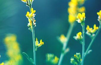 Yellow Flowers Blur Wallpaper 720x1544 340x220