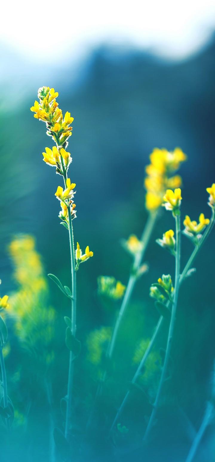 Yellow Flowers Blur Wallpaper 720x1544