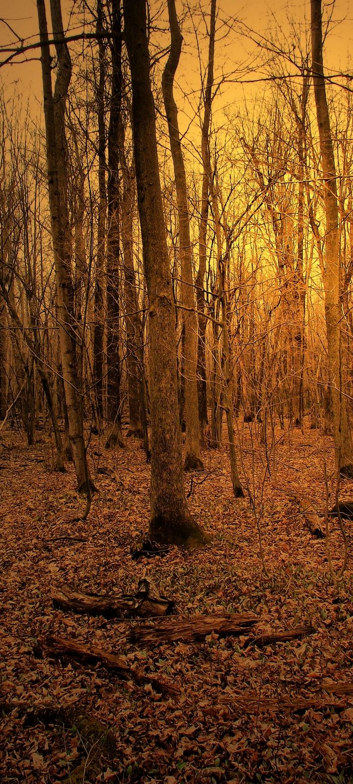 Autumn Forest Trees Wallpaper 720x1600