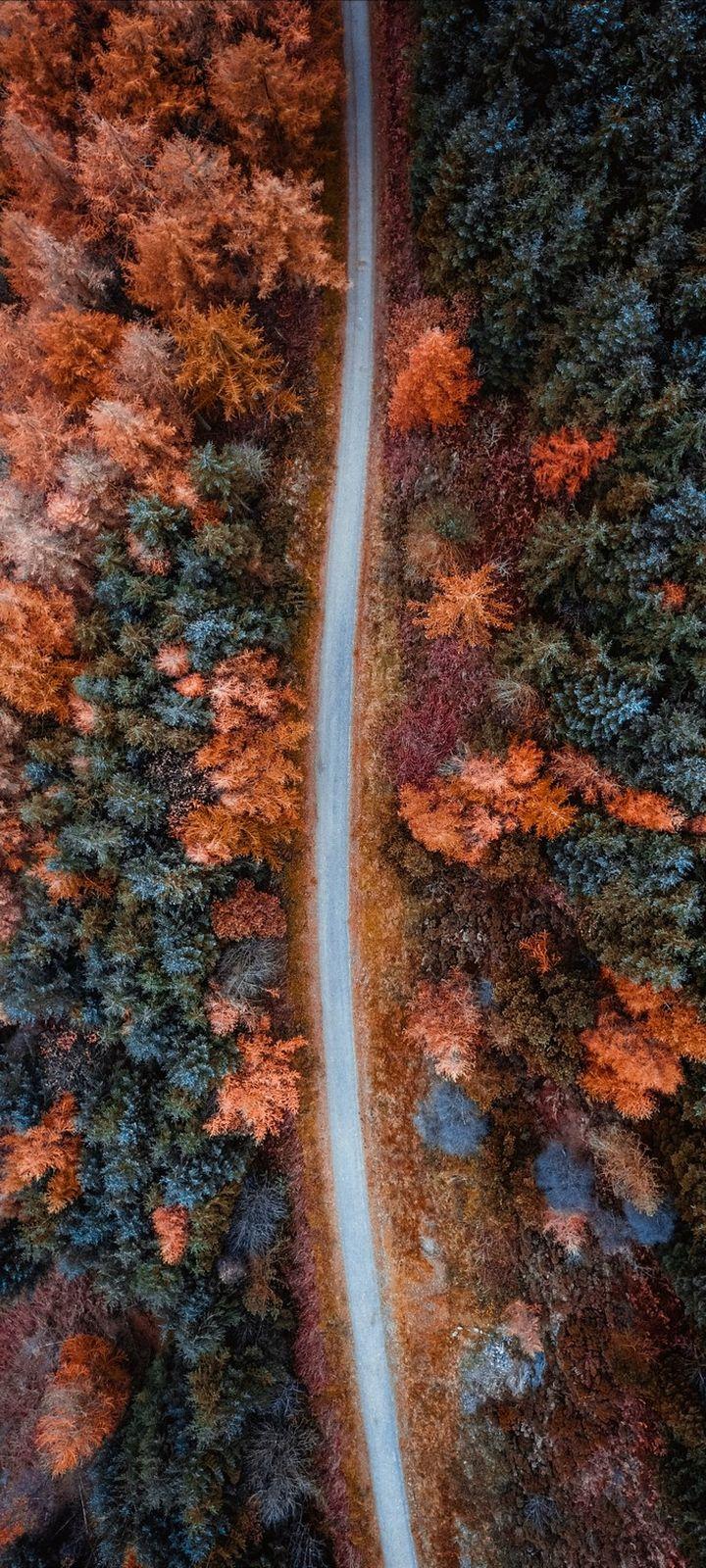 Autumn Road Aerial View Wallpaper 720x1600