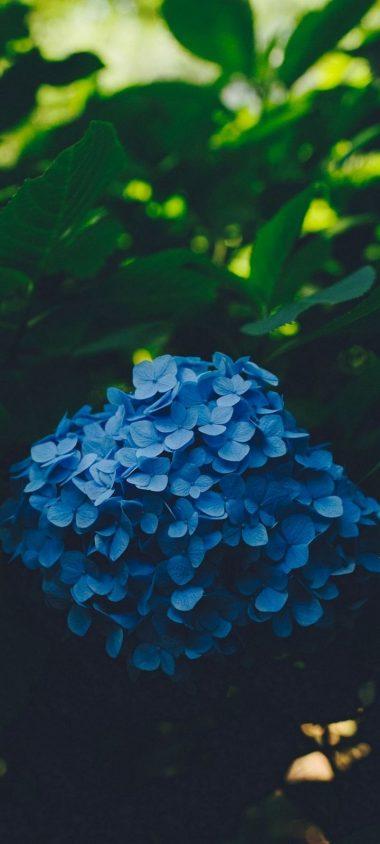 Blue Leaf Flower Wallpaper 720x1600 380x844