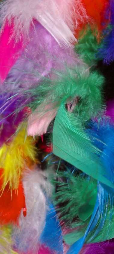 Feathers Background Colorful Wallpaper 720x1600 380x844