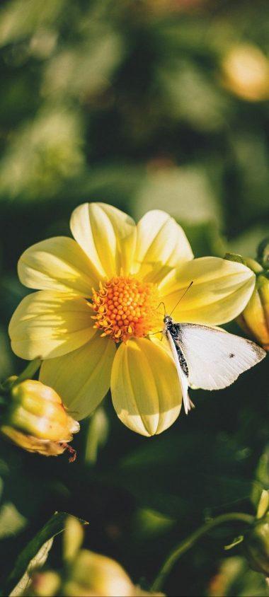 Flowers Bloom Butterfly Wallpaper 720x1600 380x844