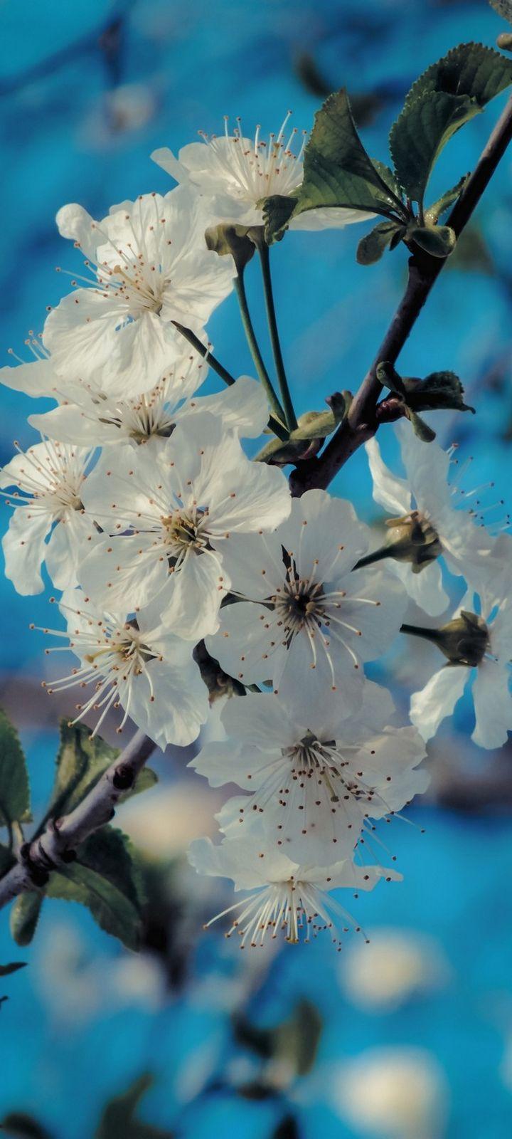 Flowers Bloom Spring Wallpaper 720x1600