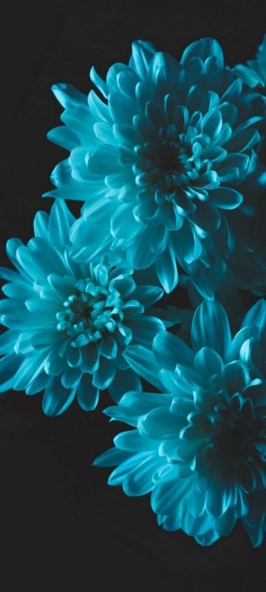 Flowers Blue Petals Wallpaper 720x1600 380x844