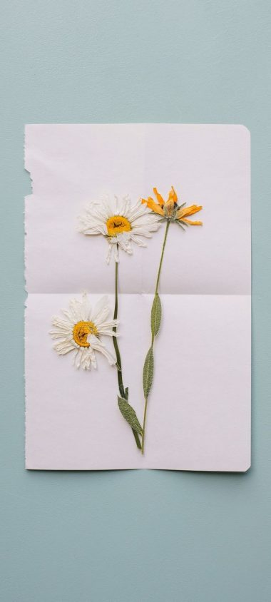 Flowers Herbarium Dry Wallpaper 720x1600 380x844