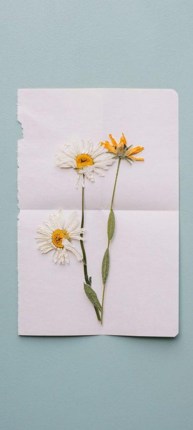 Flowers Herbarium Dry Wallpaper 720x1600 380x844