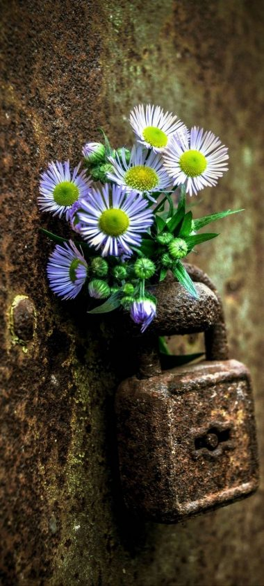Flowers Lock Rust Wallpaper 720x1600 380x844