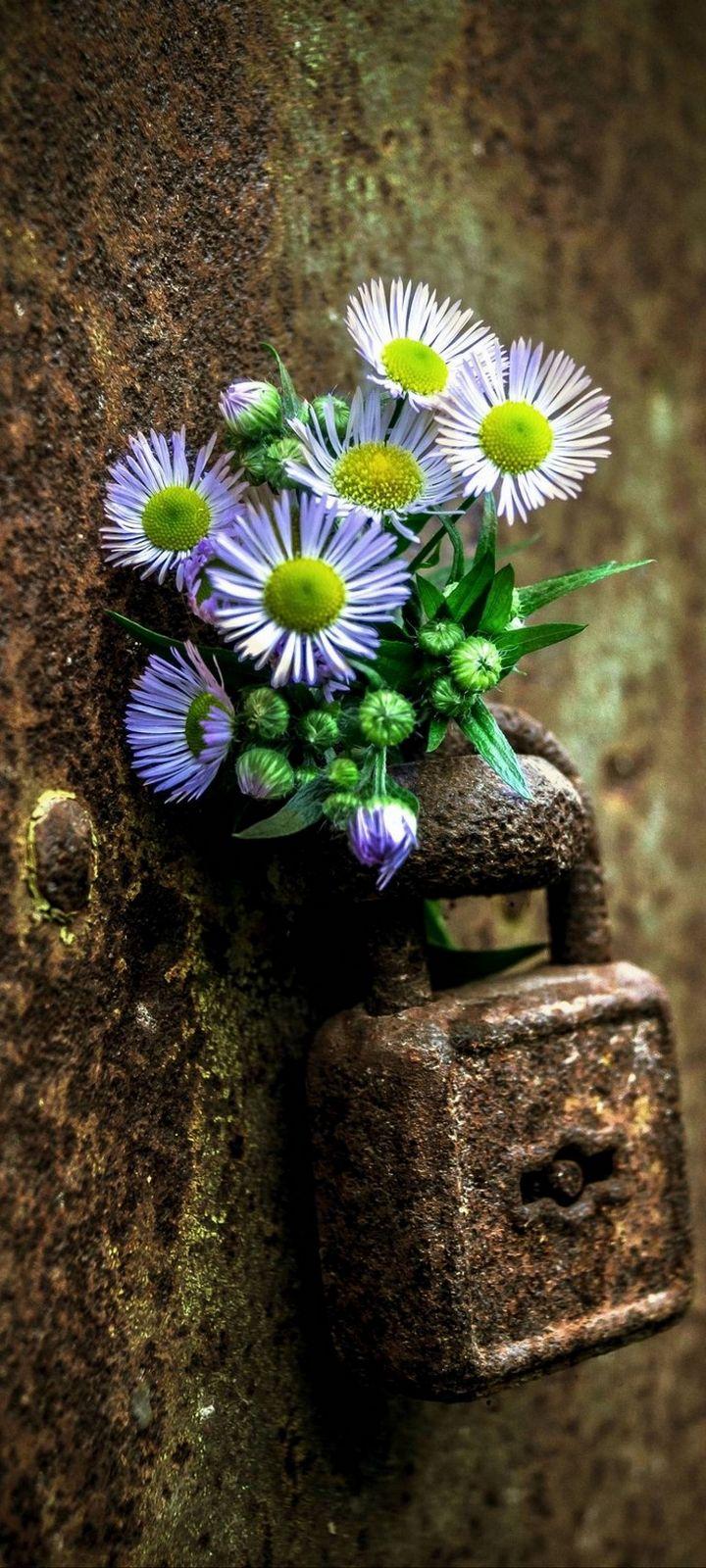 Flowers Lock Rust Wallpaper 720x1600