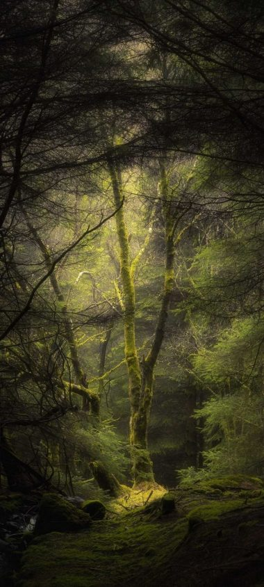 Forest Fog Trees Wallpaper 720x1600 380x844