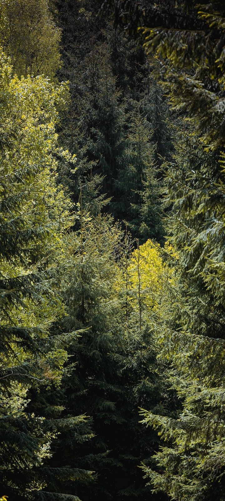 Forest Trees Foliage Wallpaper 720x1600