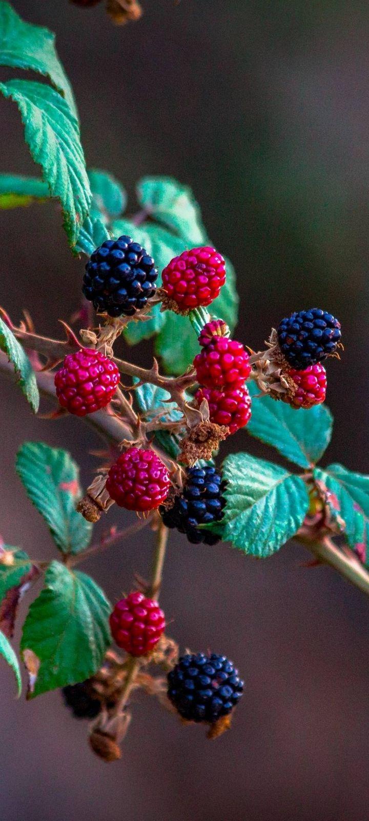 Fruits Raspberry Blackberry Wallpaper 720x1600