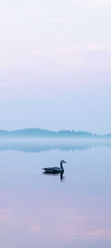Goose Lake Fog Wallpaper 720x1600 380x844