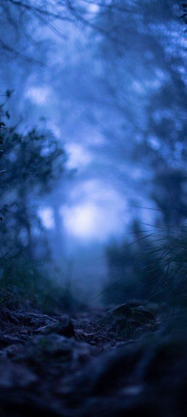 Grass Blur Macro Wallpaper 720x1600 380x844