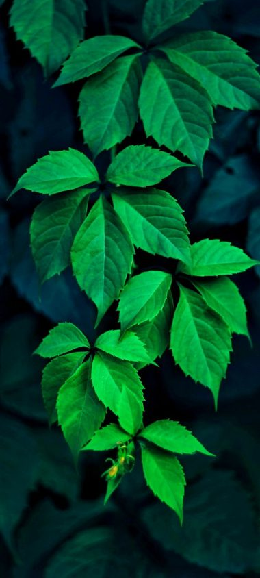 Green Leaves Wallpaper 720x1600 380x844