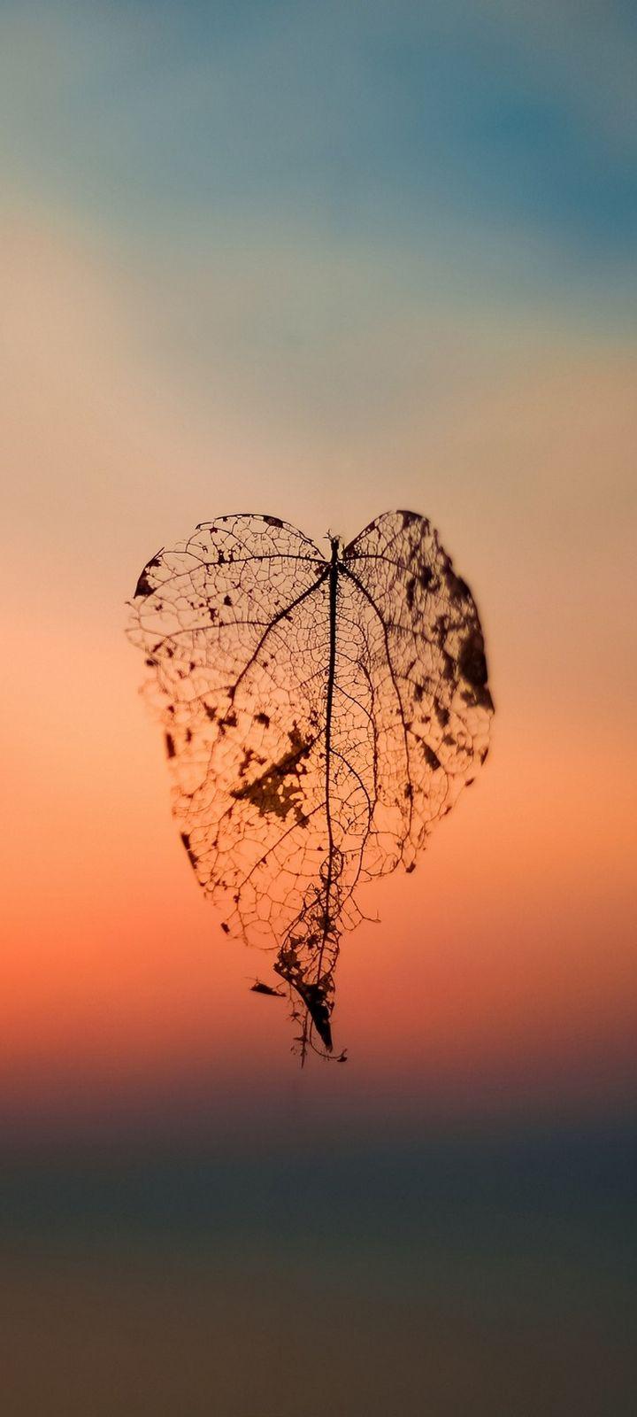 Leaf Autumn Blur Wallpaper 720x1600