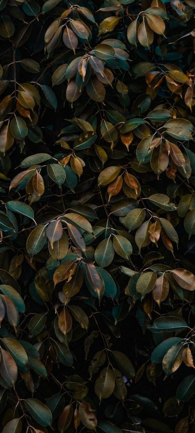 Leaves Bushes Plant Wallpaper 720x1600 380x844