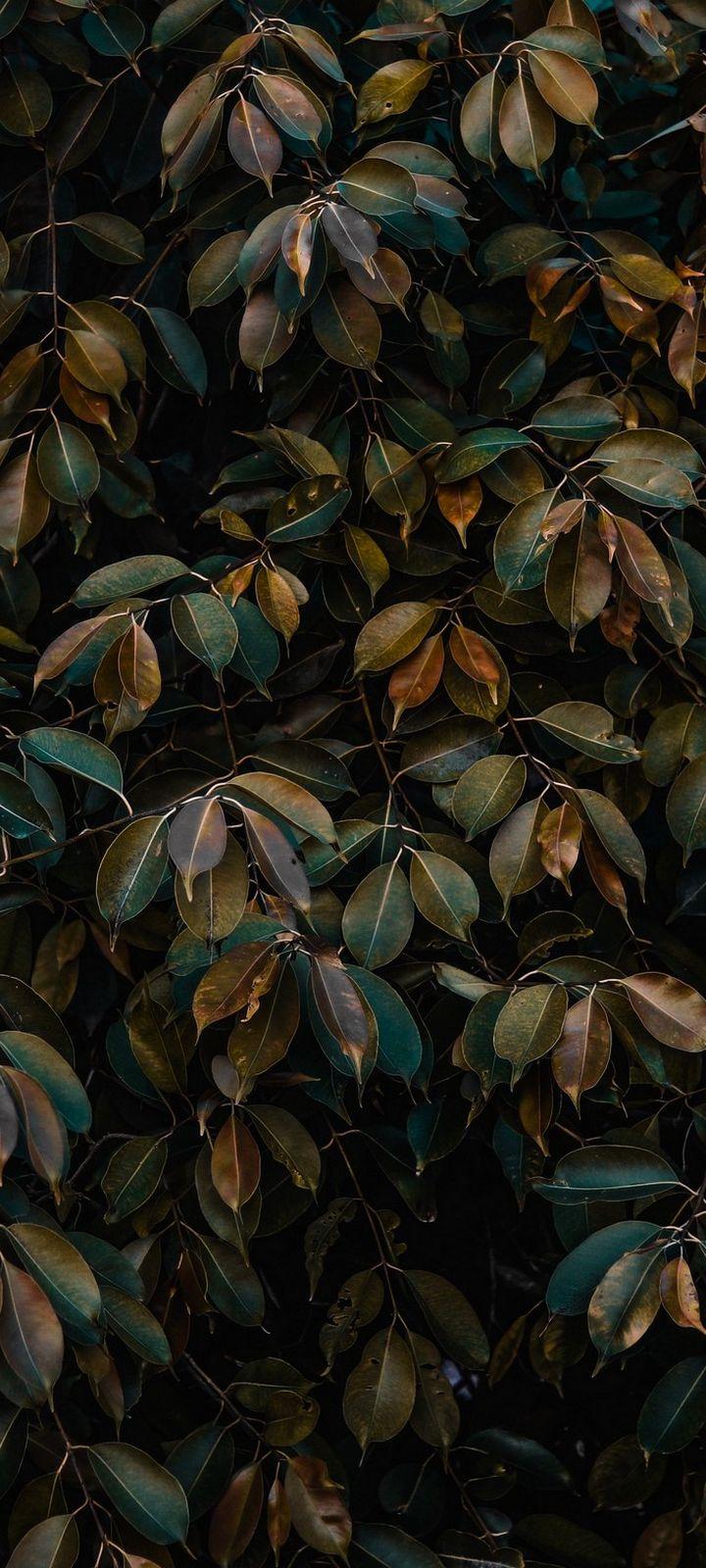 Leaves Bushes Plant Wallpaper 720x1600