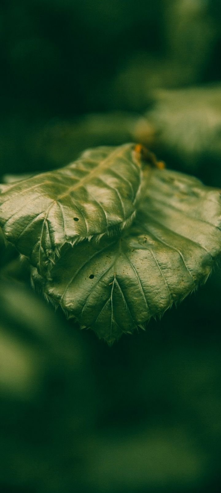Leaves Green Macro Wallpaper 720x1600
