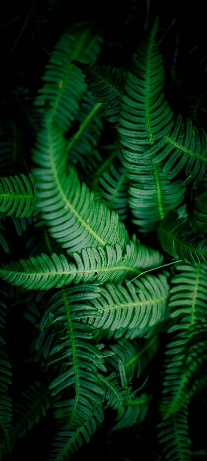 Leaves Green Shade Wallpaper 720x1600