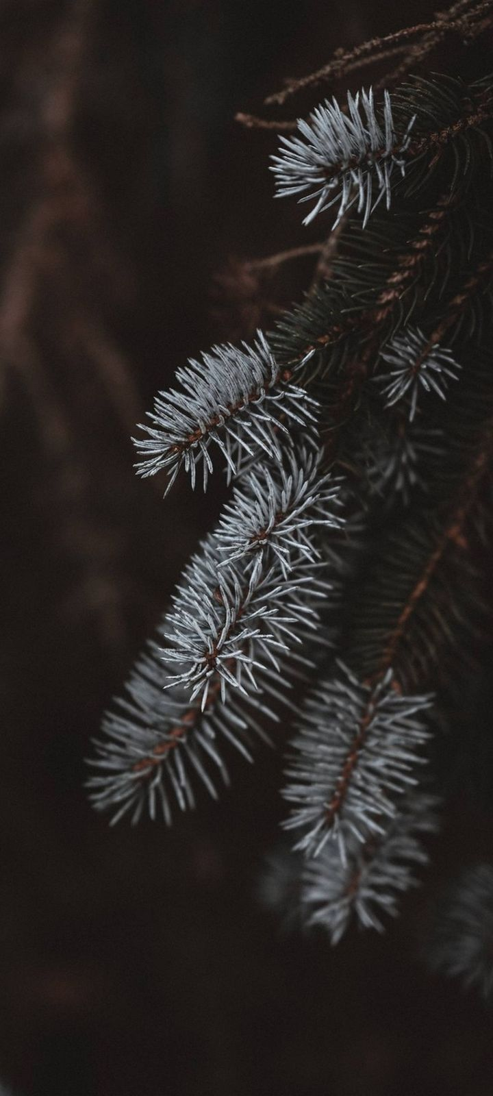 Macro Spruce Branches Wallpaper 720x1600