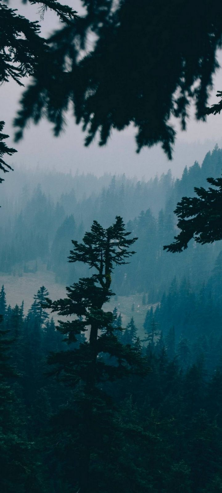 Nature Forest Trees Wallpaper 720x1600