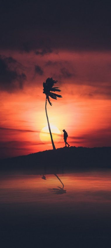 Palm Silhouette Sunset Wallpaper 720x1600 380x844