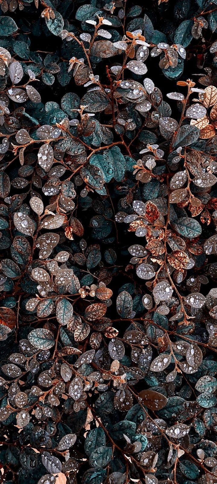 Plant Bush Leaves Wallpaper 720x1600