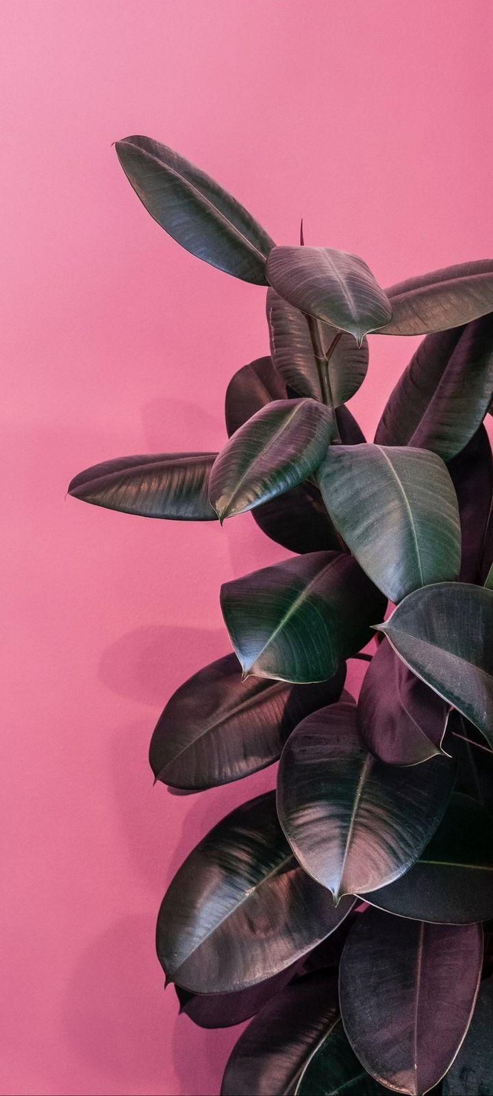 Plant Leaves Exotic Wallpaper 720x1600