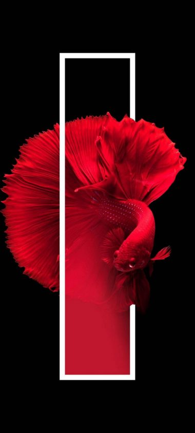 Red Fish Black Background Minimal Wallpaper 720x1600 380x844