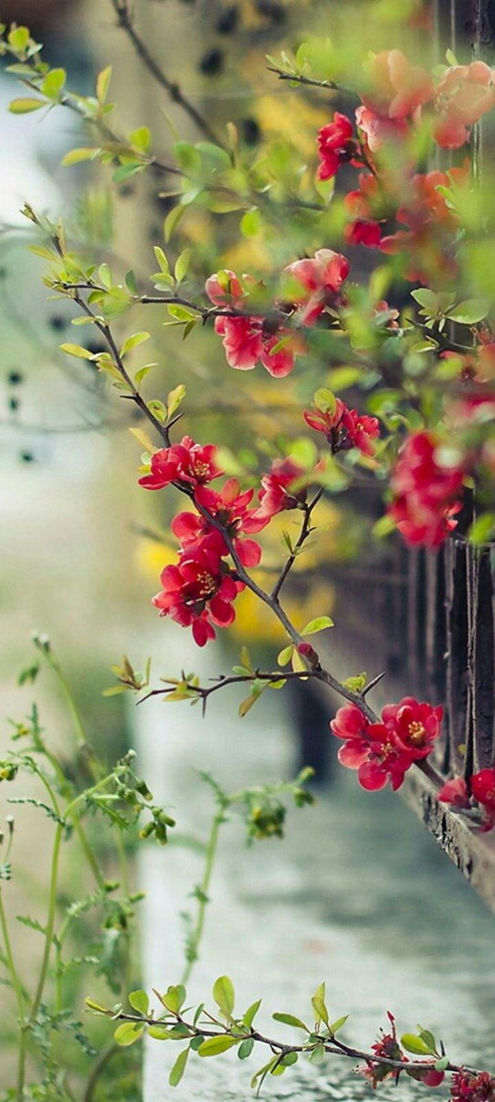 Red Flowers Wallpaper 720x1600