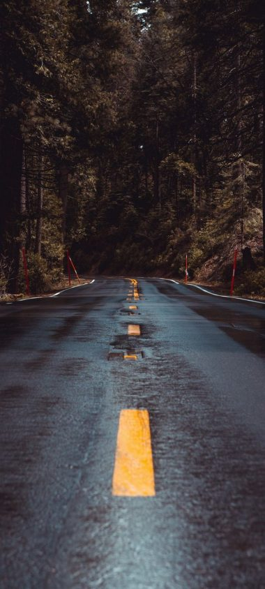 Road Forest Turn Wallpaper 720x1600 380x844