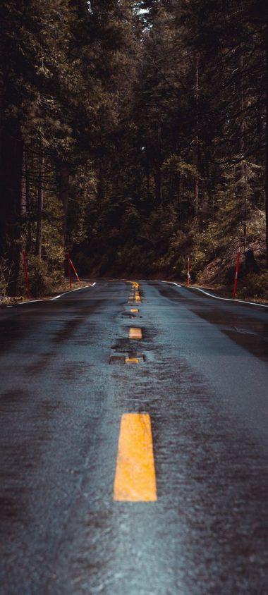 Road Forest Turn Wallpaper 720x1600 380x844