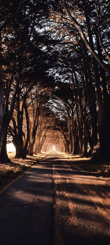 Road Trees Shadow Wallpaper 720x1600 380x844