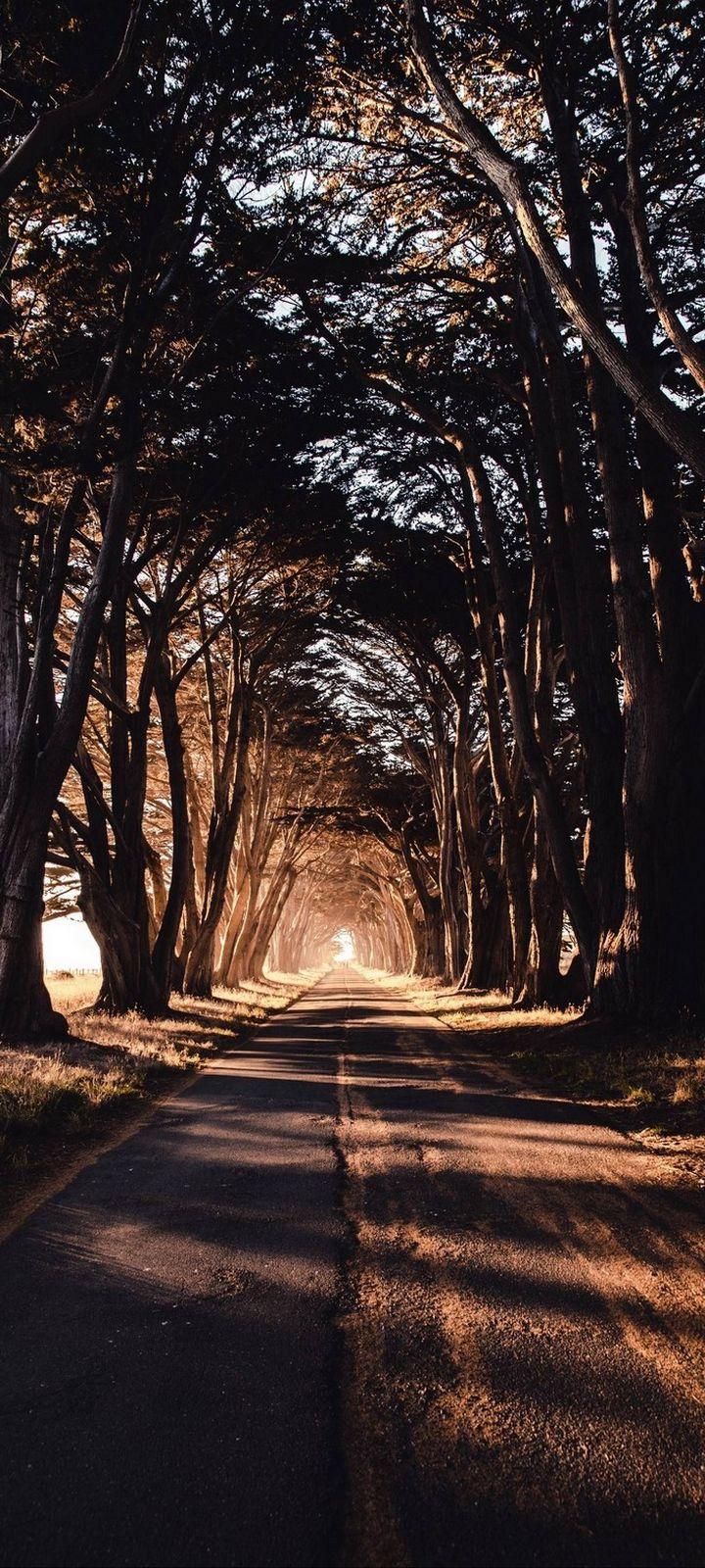Road Trees Shadow Wallpaper 720x1600