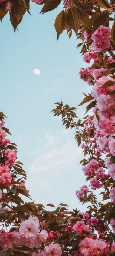 Sakura Flowers Pink Wallpaper 720x1600 380x844