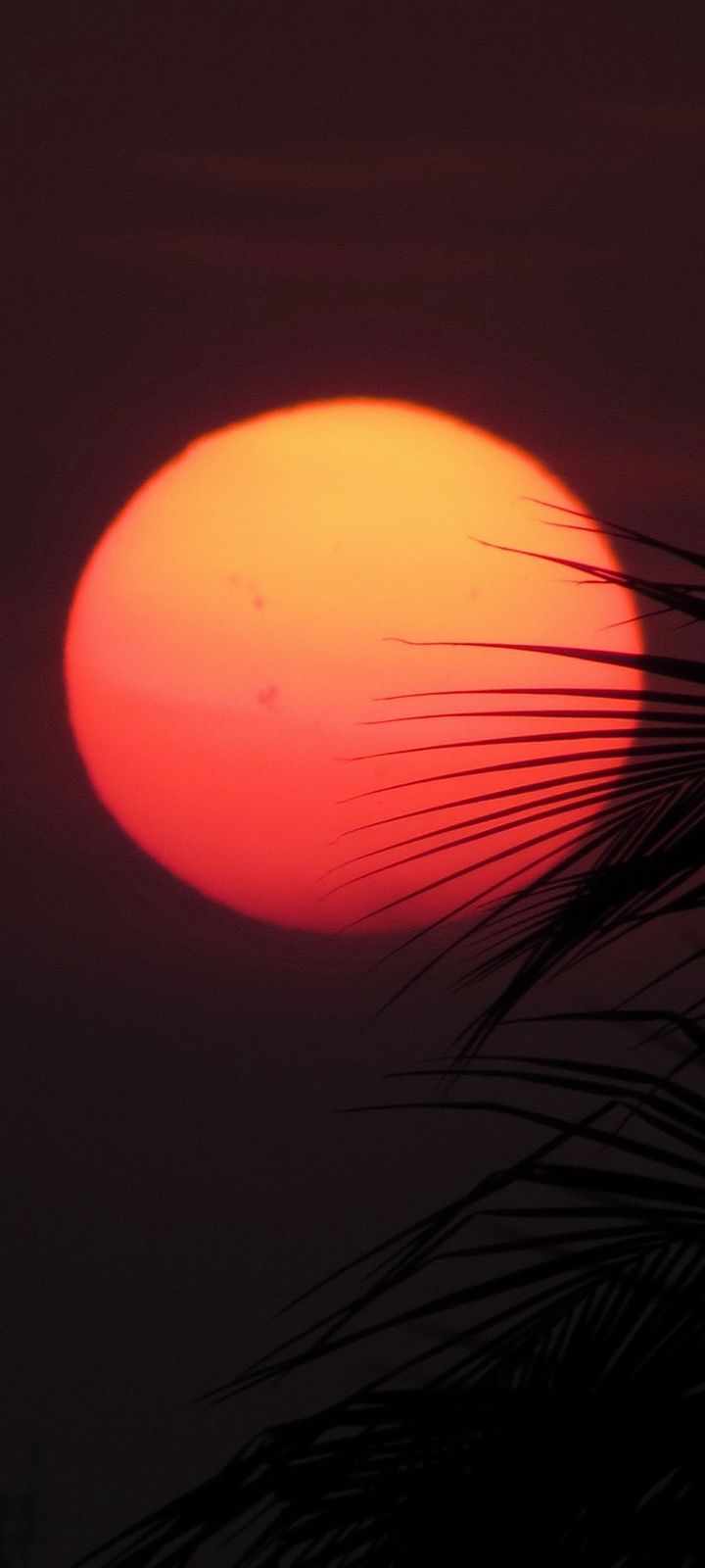 Sun Red Sunset Wallpaper 720x1600