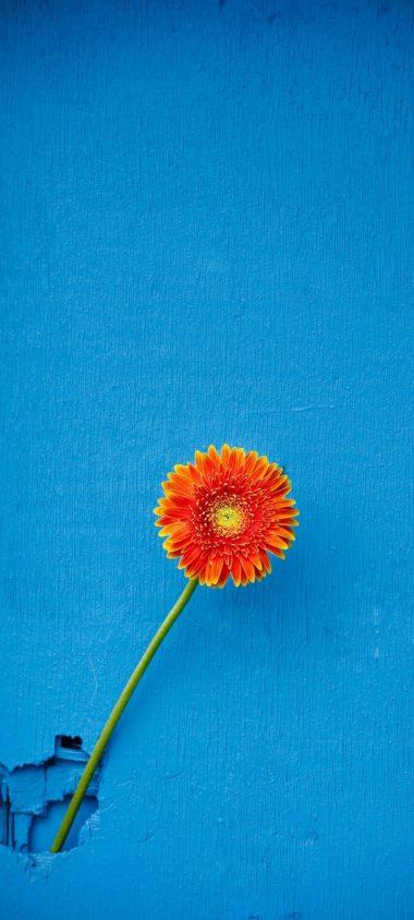 Texture Back Orange Flower Wallpaper 720x1600 380x844