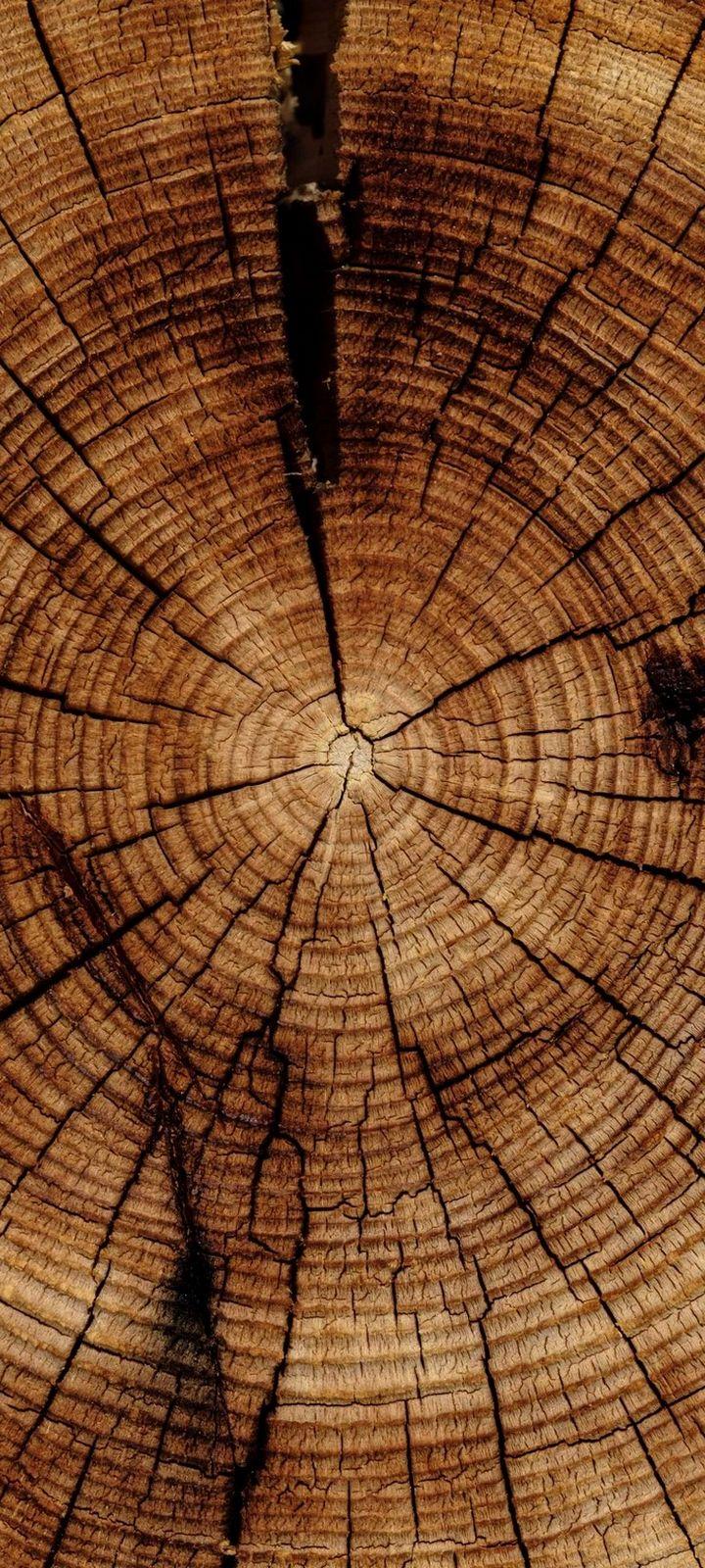 Trunk Tree Texture Wallpaper 720x1600