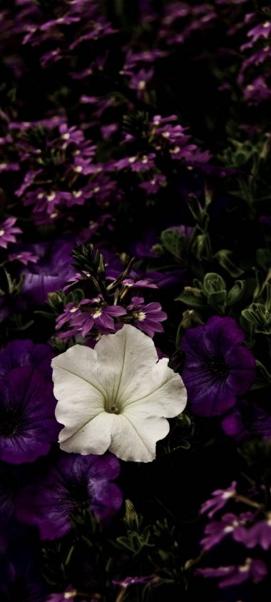 White Flowerbed Contrast Wallpaper 720x1600 380x844