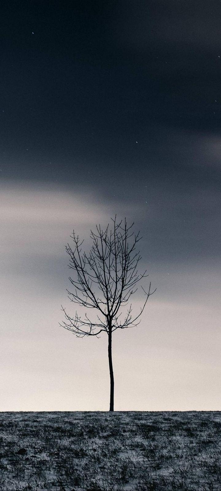 Winter Tree Sky Wallpaper 720x1600