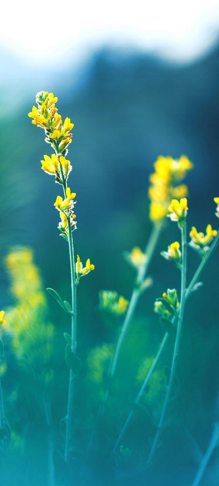 Yellow Flowers Blur Wallpaper 720x1600