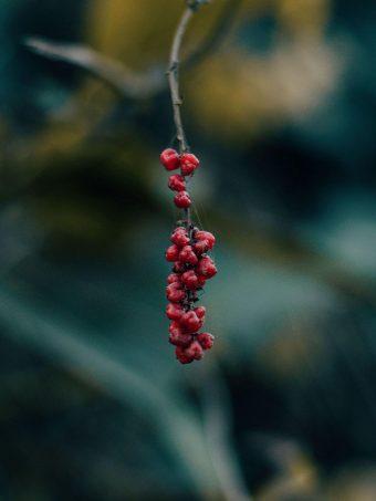 Berry Branch Macro 1620x2160 1 340x453