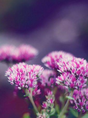Flower Macro Blurring 1620x2160 1 340x453