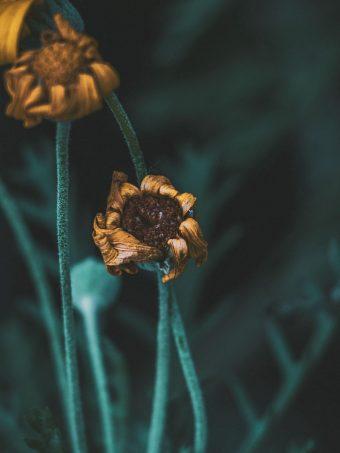 Flower Macro Stems 1620x2160 1 340x453