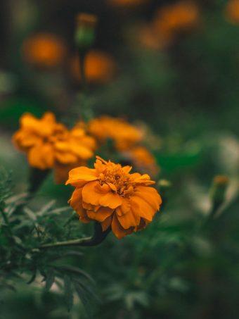 Flower Orange Macro 1620x2160 1 340x453
