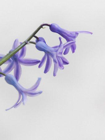 Flower Petals Lilac Branch 1620x2160 1 340x453